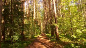 В лесу в полдень