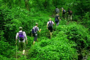Прогулка с гидом по лесу