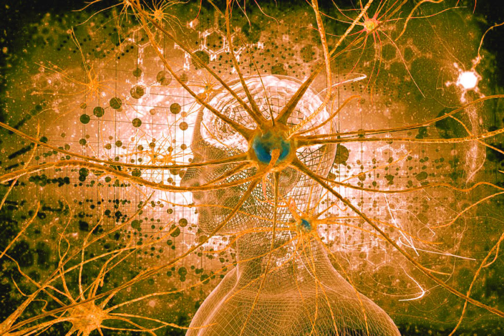 Новые нейронные связи образуются и после 40 лет