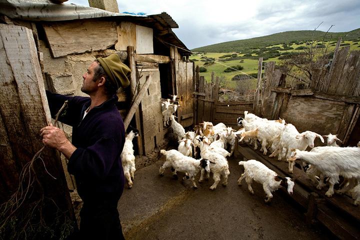 Итальянские пастухи